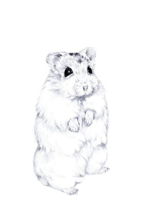 Hamster sketch 2 by BlueBirdie on DeviantArt