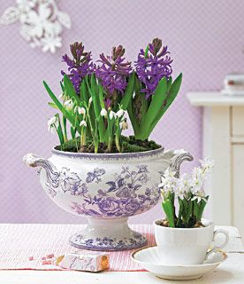 Hyacinths in soup toureen and tea cup