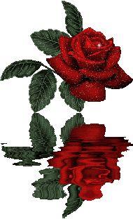 ورد متحرك رائع ورد متحرك صور ورد متحرك صور ورود متحركة Roses Moving Pictures Guzel Cicekler Guzel Guller Dogum Cicek