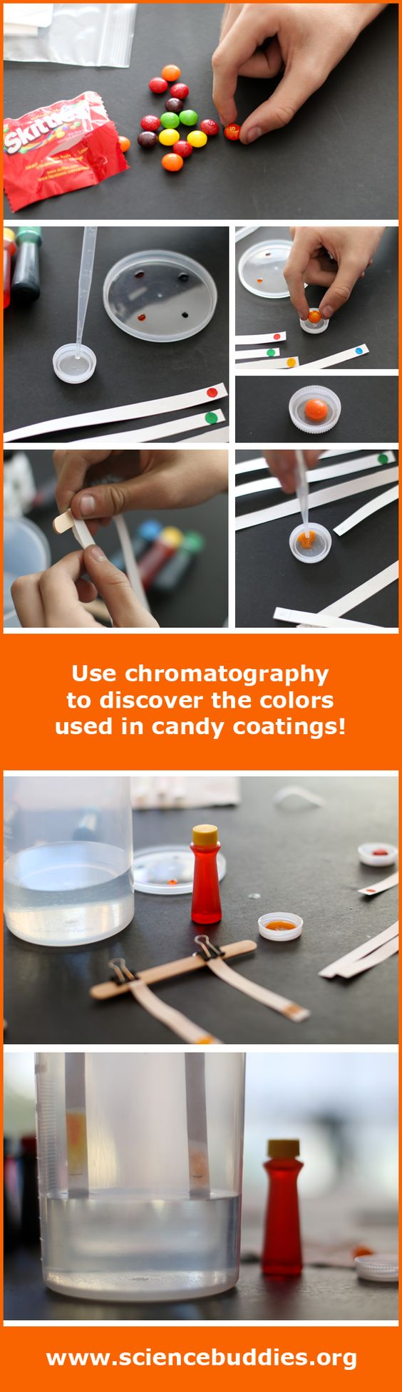 Candy Color Chromatography experiment and photos of hands-on science STEM project with kids at home / family science