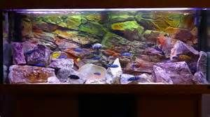 african cichlids tank - Bing images