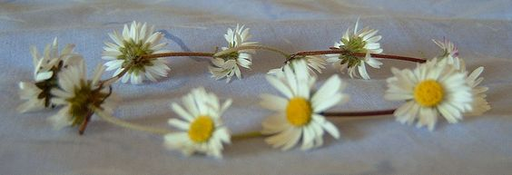Must have made miles of daisy chains