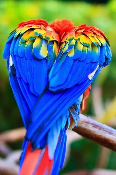 Corazones en la naturaleza! Costa Rica