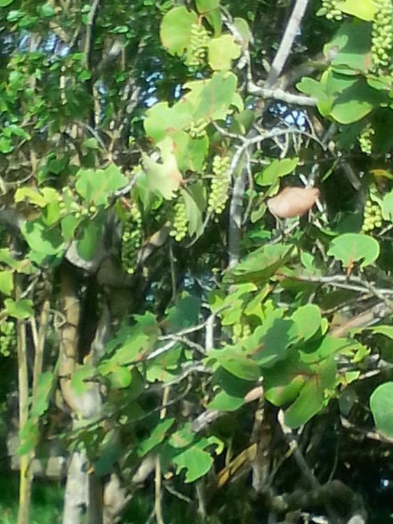sabana buey women 37 uso de métodos anticonceptivos en mujeres que asistieron a la clínica rural sabana de buey baní flor  with a total of 3 women mientras que en el.
