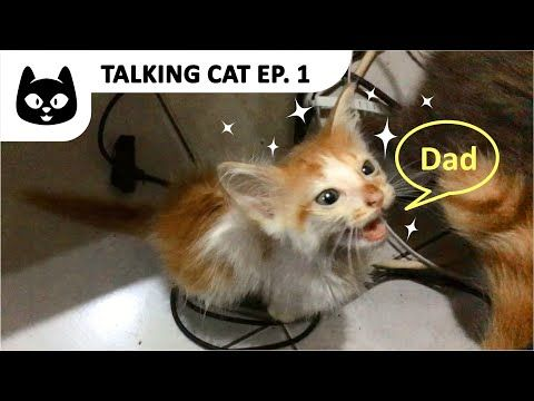 Talking Cat Ep 1 Kitty Calling Me Dad Kitten Angry At The Cats Feel Free To Subscribe Share And Like Talking Cat Ep 1 Kitty In 2020 Cat Talk Call My Dad Cats