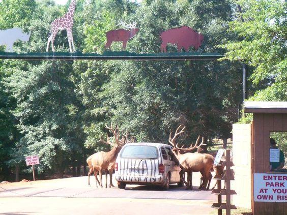 Wild Safari In Pine Mountain Ga Our State Georgia And