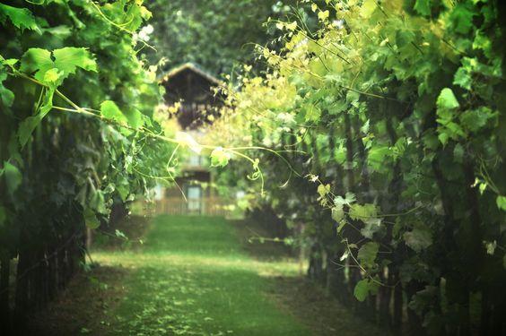 https://flic.kr/p/K52rKo | Wine Country Oregon :-)