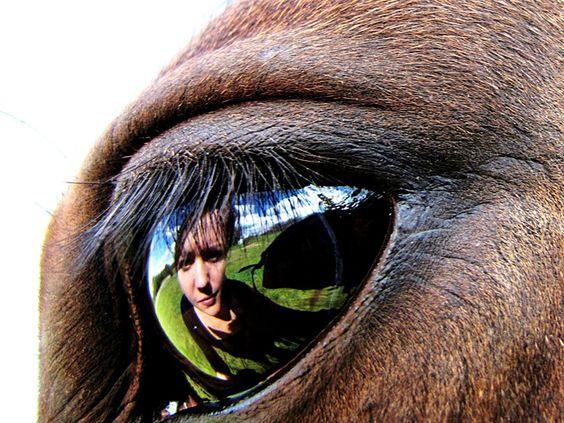 horse eye...