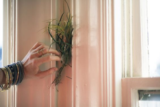 Create a lattice with nails to hold air plants