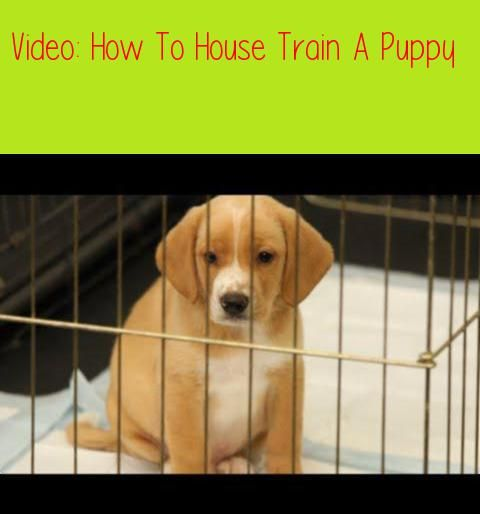 How To House Train A Puppy Dog Trainingprefer Text House