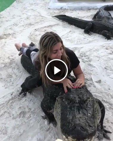Mulher corajosa alimentando jacaré