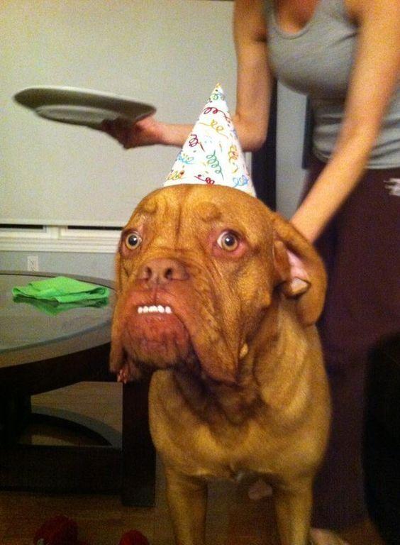 Surpresa: | 29 fotos de cães que nunca vão perder a graça