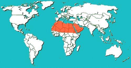 Map Of Sahara Desert sahara desert on world map burkeen 500 ...