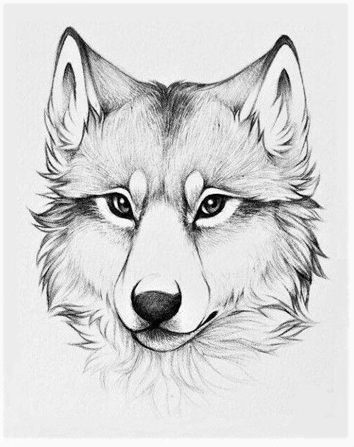 Dessin Loup Wolf Chien Dog Blackandwhite Tete Head Tete De Loup Dessin Dessin De Chien Tatouage Loup