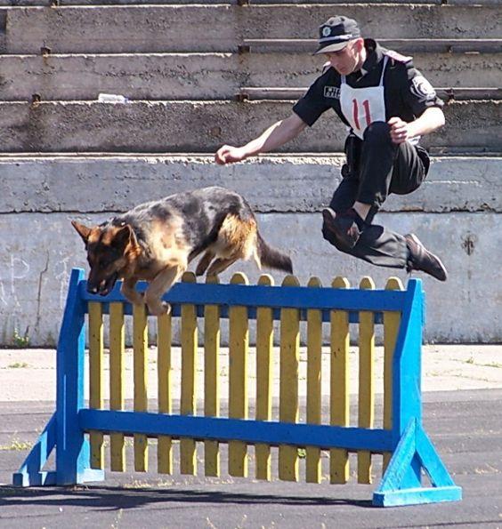 Dog Training Bedford Tx