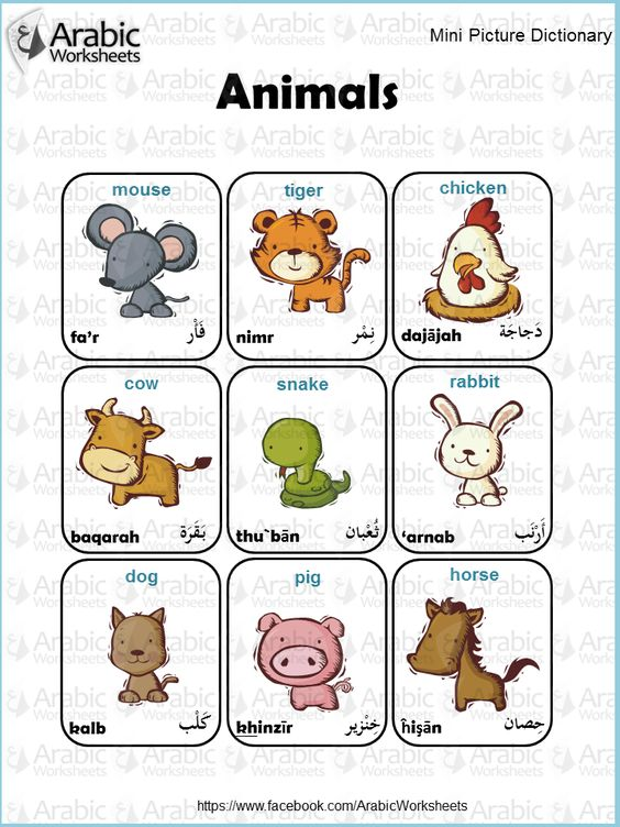 ArabicEnglish Picture Dictionary Animals ArabicWorksheets tm