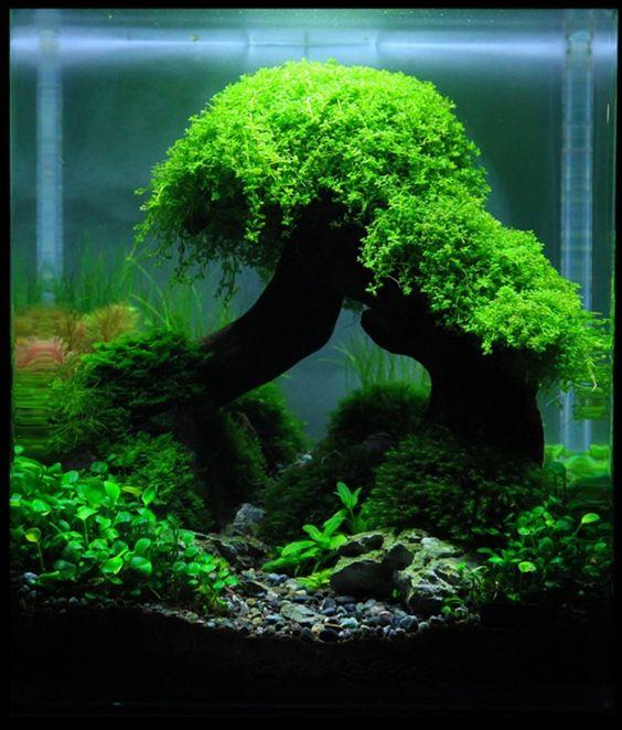 Aquarium Aquascape: Planted Aquarium, Aquascaping And Aquarium On Pinterest