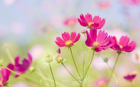 луг, поляна, цветок, цветы, лепестки