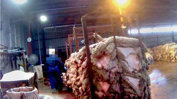 Undercover footage has revealed brutally violent practices towards lambs and apparently unethical labeling practices at a meat plant owned by the country's largest lamb producer. Demand that the plant be investigated and penalized if found guilty of these alleged violations.