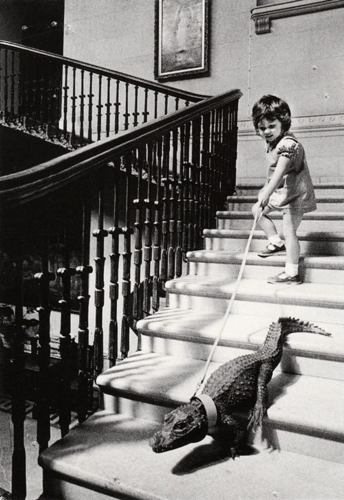 descending a staircase  in a house once lived in by britain's naval hero admiral horatio nelson, a pet crocodile is led on a tour of her home by a four old girl  photo byjohn drysdale, cricket st. thomas, england, 1976