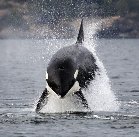 Wild and free in Victoria, BC, Canada by Mike Cooke.