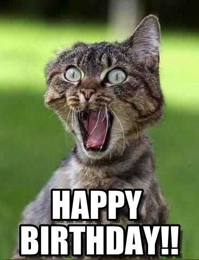 Happy Birthday Funny Meme Images : Happy birthday funny meme cat memes pinterest