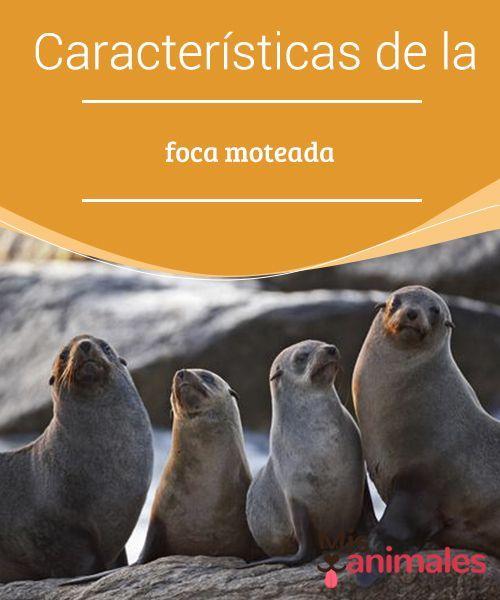 Foca Comun Informacion Y Caracteristicas Foca Animales Animales Carnivoros
