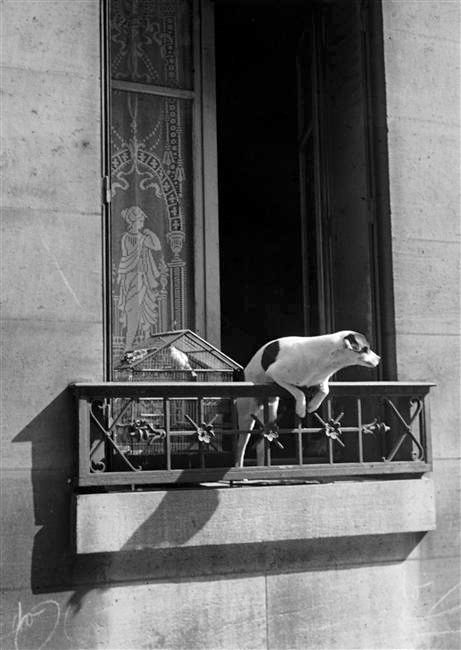 'Le chien concierge' by Andre Kertesz, 1926  © Estate of Andre Kertesz  Found: The Blue Lantern, Accessed July 24, 2012