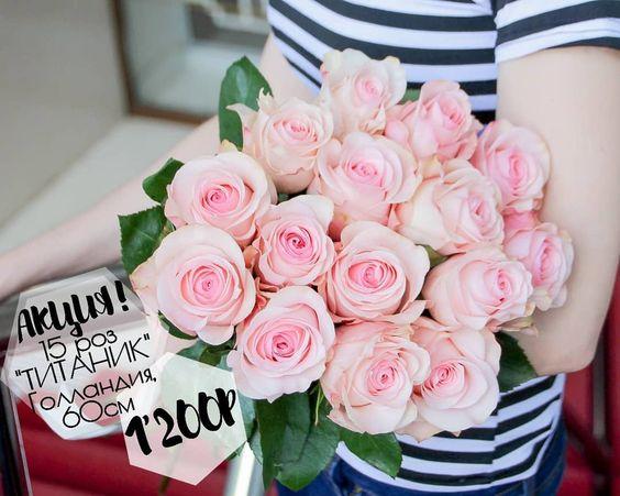Gollandskie Rozy Titanik 60sm Nezhnogo Rozovogo Ottenka 11 Roz 880 15 Roz 1 200 25 Roz 2 Rose Flowers Plants