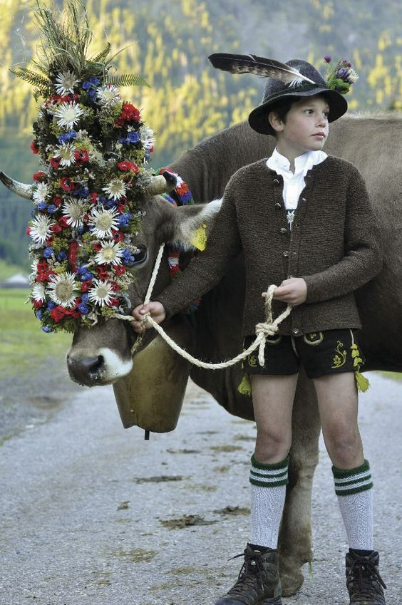 Impressive Alpine flower festive headdress on a cow, who is handled by a Lederhosen wearing Boy in hand knitted stockings and sweater.