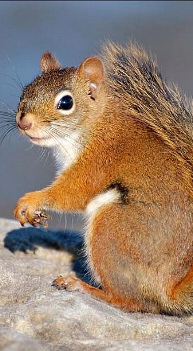 Smiles the Squirrel ...my alter ego. lol