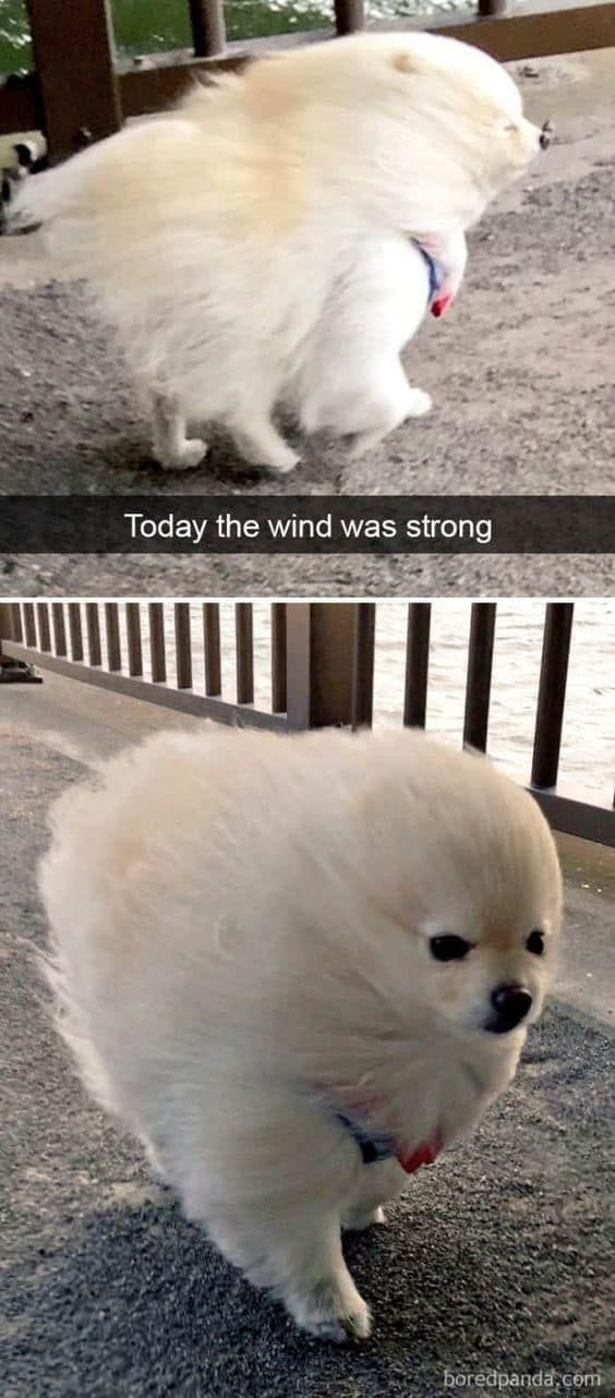25 Pics Funny Dog Memes To Cheer You Up On A Bad Day Lovely Animals World Funny Dog Pictures Funny Dog Memes Dog Memes