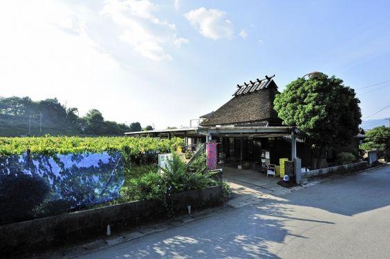 茅葺き屋根の「中島農園」