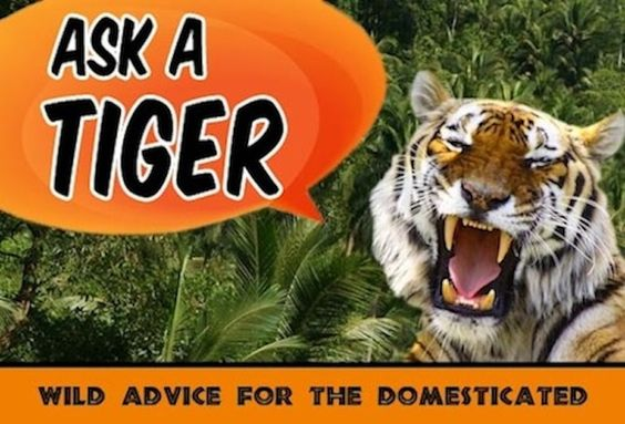 Ask a Tiger: What do you use to write your column?