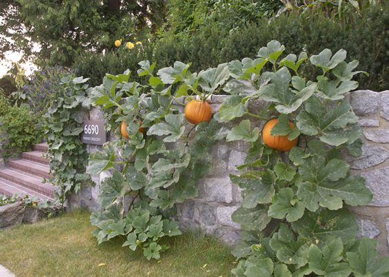 for the pumpkins, alone!