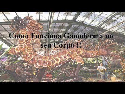 Como Funciona Ganoderma no seu Corpo !!