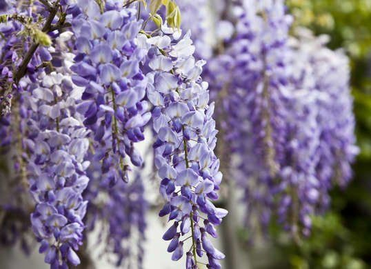 The 25 Most Dangerous Plants For Your Pet In 2020 Wisteria Tree Plants That Repel Bugs Plants