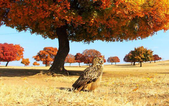 HINGGAN, REGIÃO AUTÔNOMA DA MONGÓLIA, CHINA Uma coruja apareceu em uma paisagem de outono da China