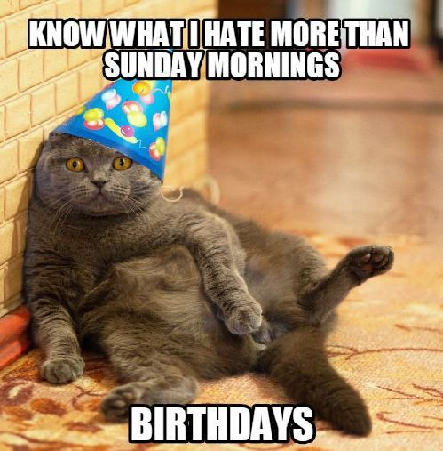 100 Best Happy Birthday Cat Memes Images In 2021 Cat Birthday Memes Happy Birthday Cat Cat Birthday