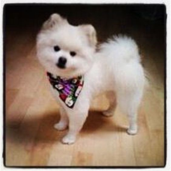 Do you think My little blind munchkin deserves to win San Diego Magazine's Cutest Pooch Contest? Have your say!