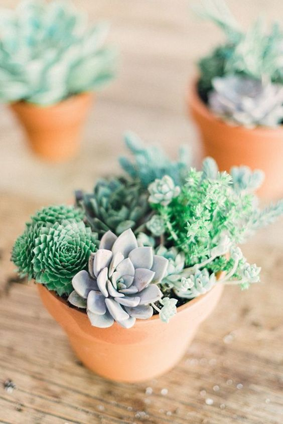 23 Ways To Decorate Your Home With Succulents Jardin Cactus