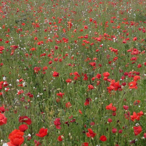Poppy Fields Eton