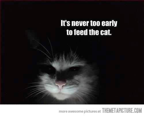 It's never too early (or late) to feed the cat.   See more about ghost hunting, cats and mornings.