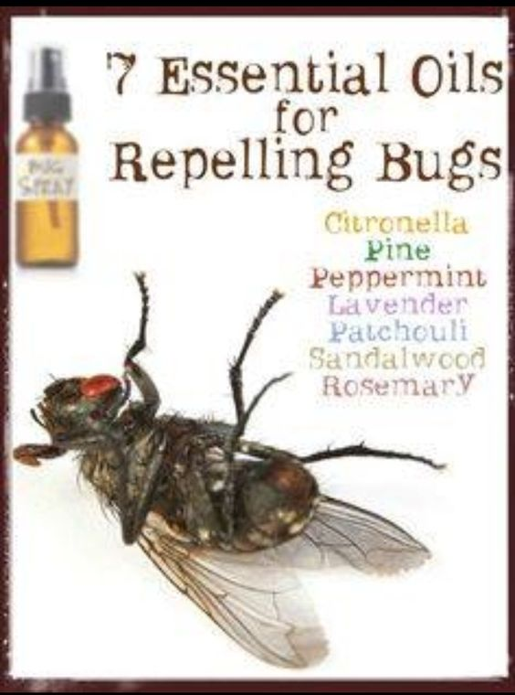 Will Peppermint Oil Kill Bed Bugs