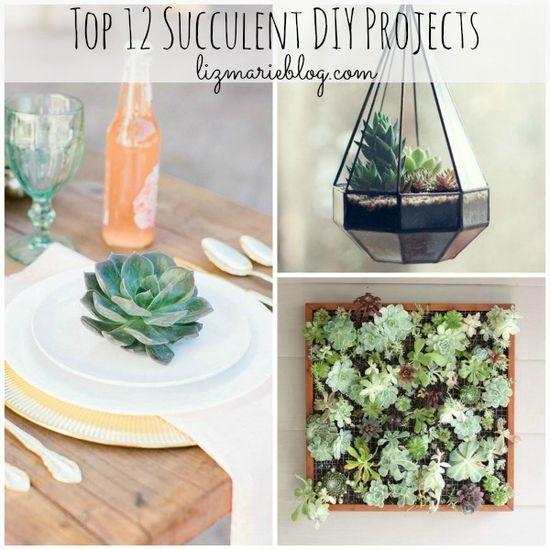 Top 12 succulent DIY Projects | Liz Marie Blog