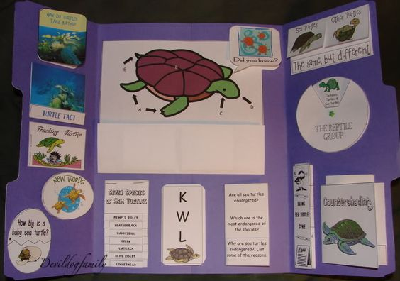 Sea Turtle Lapbook from Marine Corps Nomads Blog; find free lapbook printables here: http://www.homeschoolshare.com/sea_turtles.php
