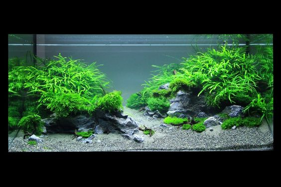 """AOL Image Search result for """"http://www.planted-aquarium.de/tl_files/gallery_creator_albums/the-art-of-the-planted-aquarium-die-kunst-d/XL06.jpg"""""""