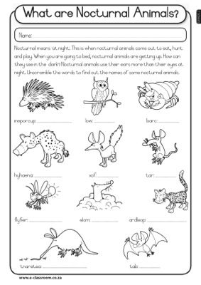 All Worksheets » Nocturnal Animals Ks1 Worksheets - Printable ...