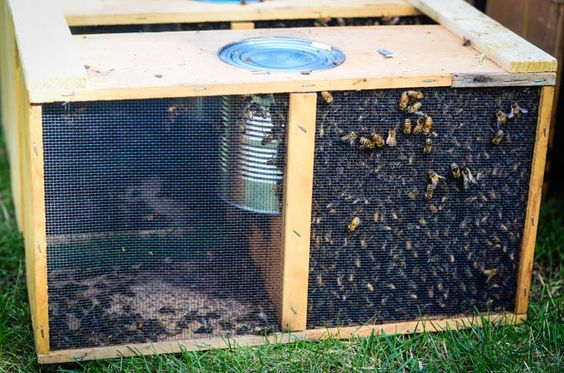 Beekeeping 101: Hiving The Bees and Homemade Sugar Syrup April 27, 2014