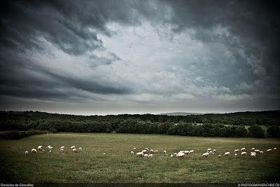 Prete moi un mouton: Notre domaine & notre élevage